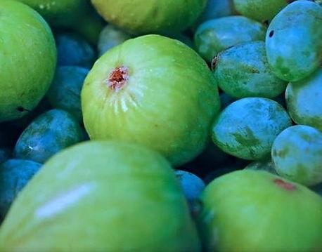 Figs & Dates, Bracč, Croatia