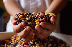beans in boy's hands