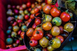 tomatoes in tins mesico green red orange yellow