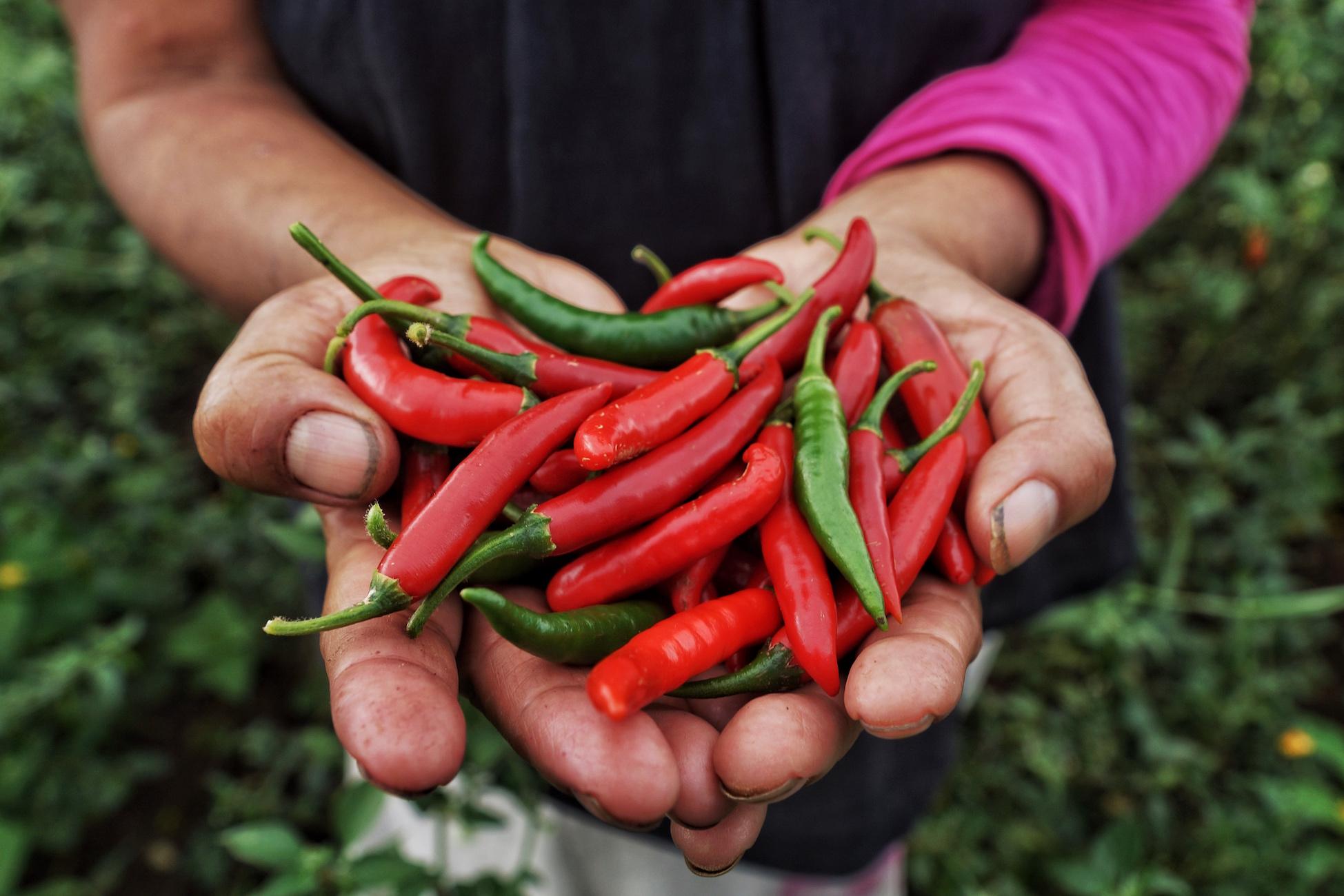 Chili Serrano Peppers