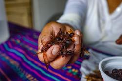 san juan ants in hand 2