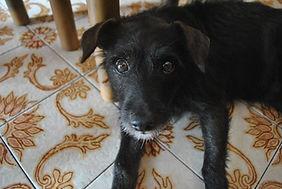 Marietta's Beloved dog