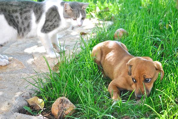 Puppy in Imotski, Croatia