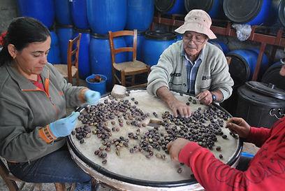 Organizing Olives, Cyprus