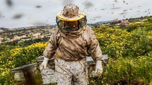 bees swarming, collecting the bee boxes in Lebanon with Ali Elamine