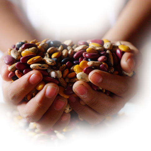 Heirloom Mexican Beans