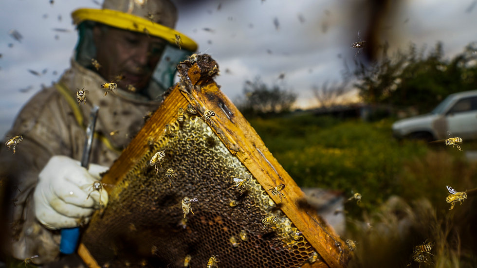 Ali elamine, the bee whisperer, beekeping in lebanon