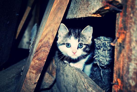 Kitten in a farm, Norway