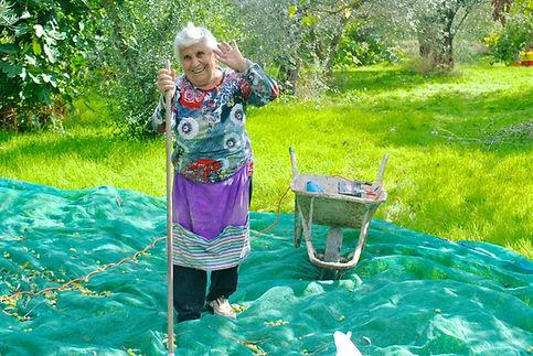 Rosa harvesting Olives, Italy