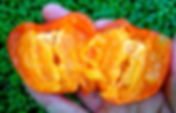 Persimmon Fruit aka Kaki Fruit