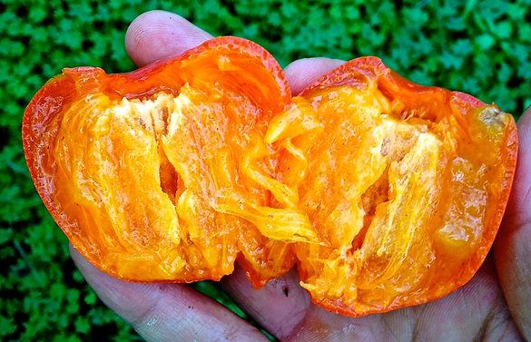 Persimmon Fruit aka Kaki Fruit
