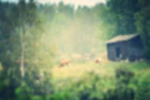 Astrid's Swedish Dairy Farm in Alfta, Sweden