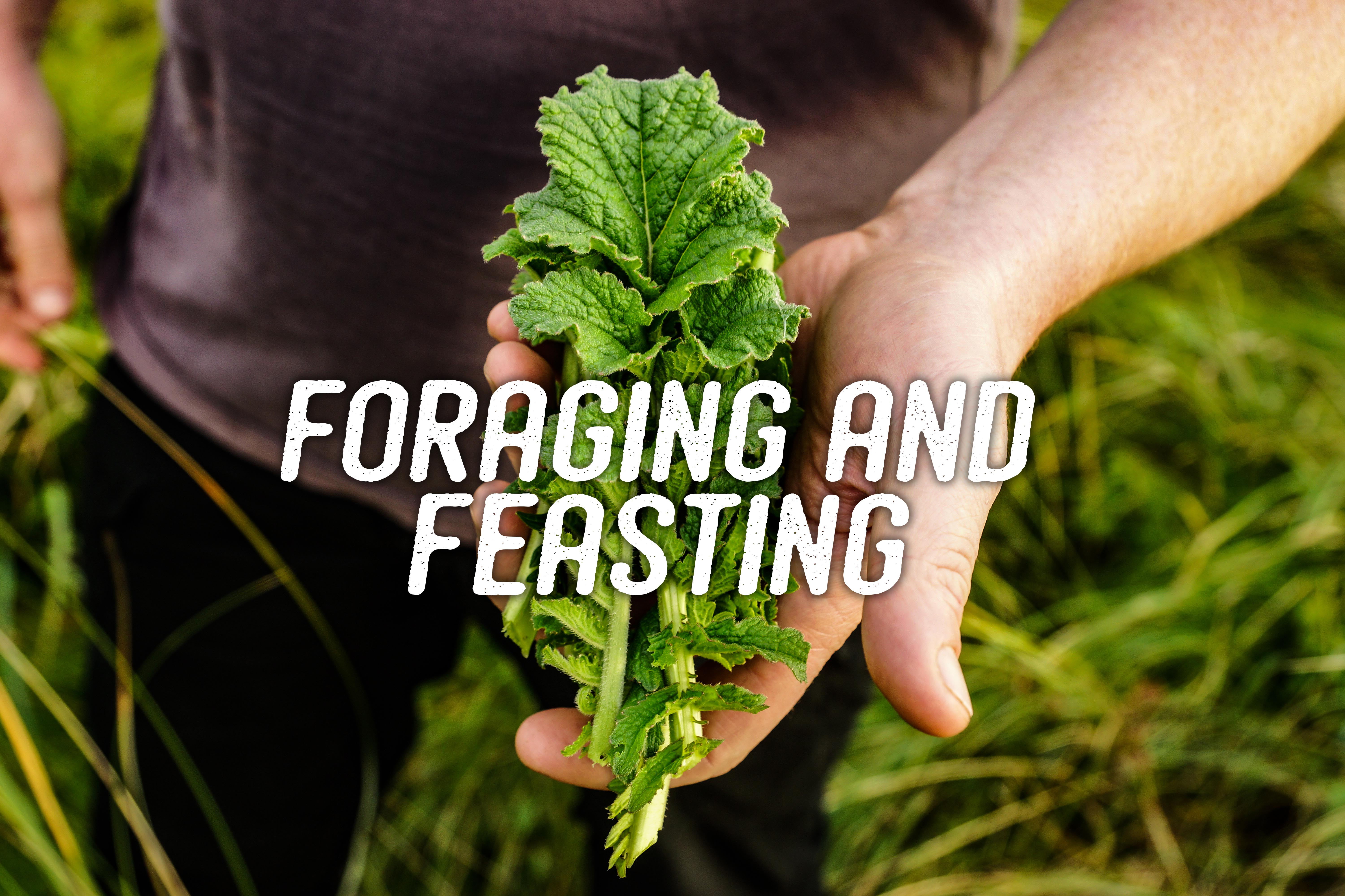 Foraging and Feasting in Wales