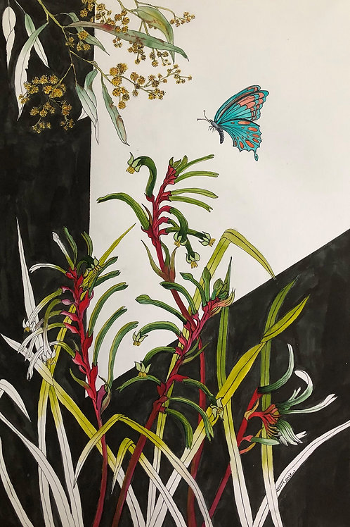 Kangaroo Paws with Wattle and Butterfly