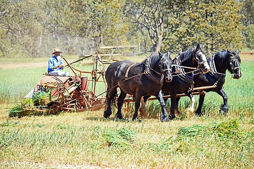3 Horse Team ... from