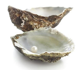 pacific-oyster-shell-and-pearl-science-p