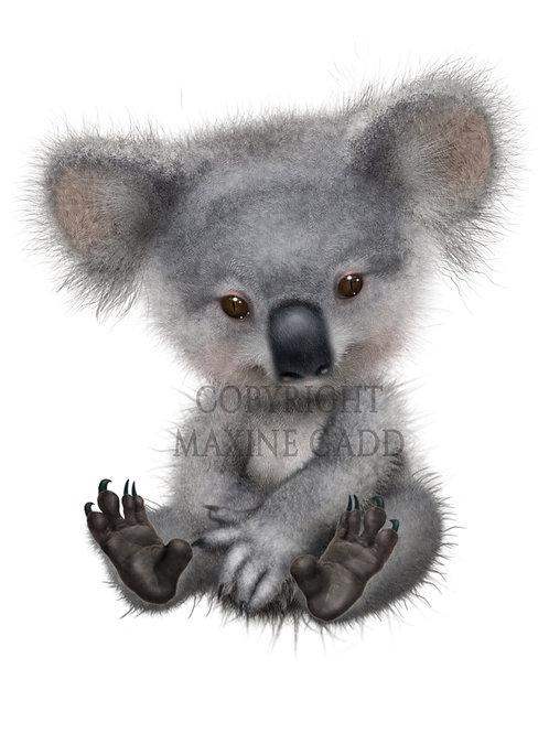 KOULA Australian Marsupial