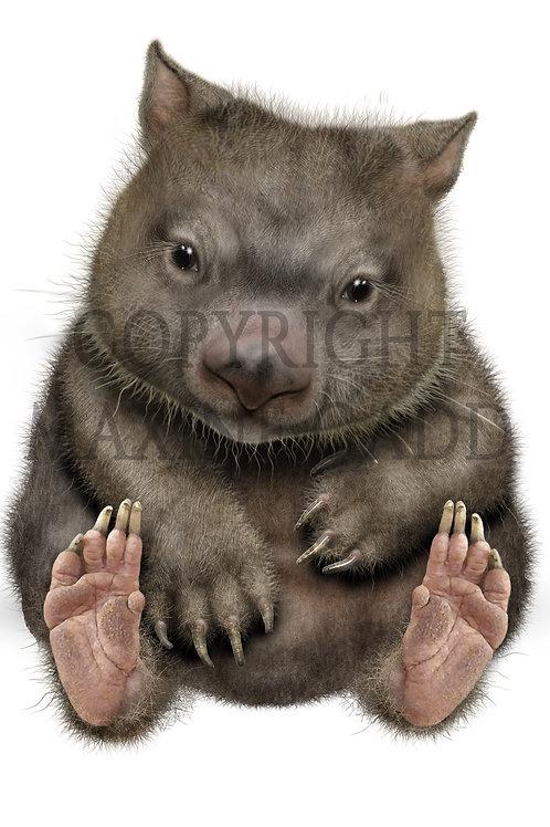 WOMBAT Australian Marsupial