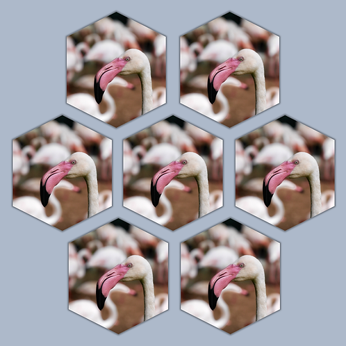 PowerPoint Template Fotokader - Ruit (7)