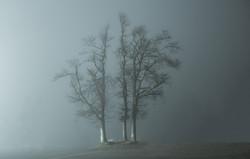 Bäume auf dem Hochblauen