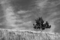 Schöner Baum auf dem Kandel Berg