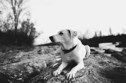 Weißer Hund am Rhein