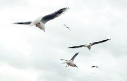 Vögel in der Luft