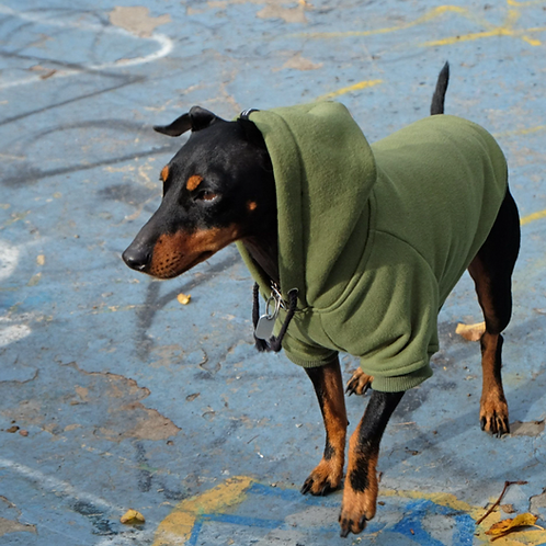 Combat Dog Hoodie