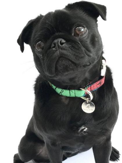 Jesmond Dog Collar