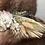 """Thumbnail: The """"Pampas Grass"""" dog flower collar"""