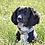 Thumbnail: Arabella Marble Dog Collar- Rose Gold