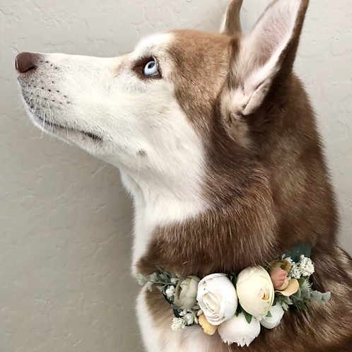 "The ""Ranunculus and Peony"" dog flower wreath collar"