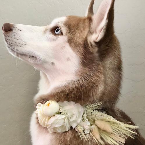 """The """"Pampas Grass"""" dog flower collar"""