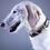 Thumbnail: Leopard Vibes Dog Collar