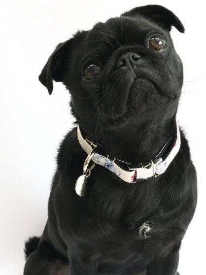 Disley Dog Collar
