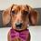 Thumbnail: Bella Harris Tweed Dog Bow Tie