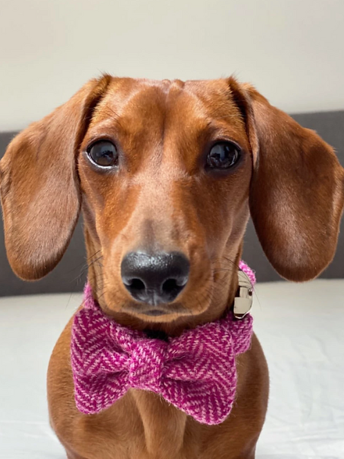 Bella Harris Tweed Dog Bow Tie
