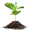 plant growing.png