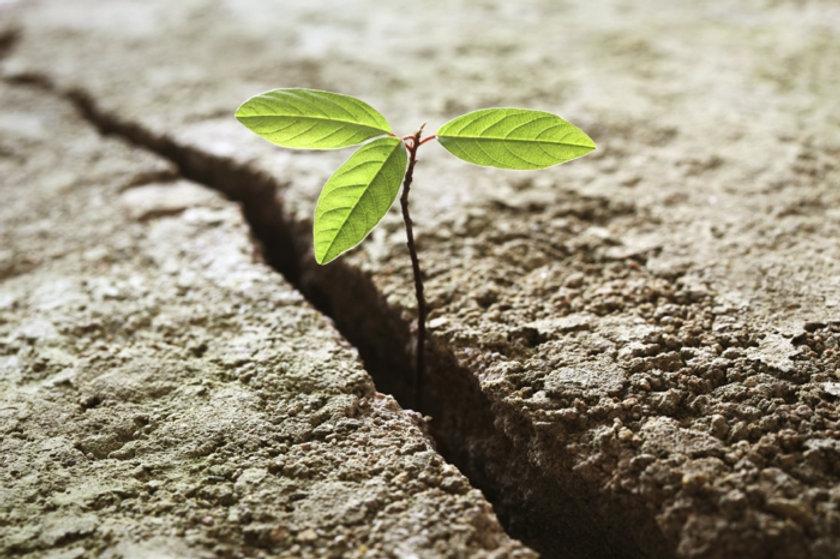 resilienz-widerstandskraft-anpassungsfä