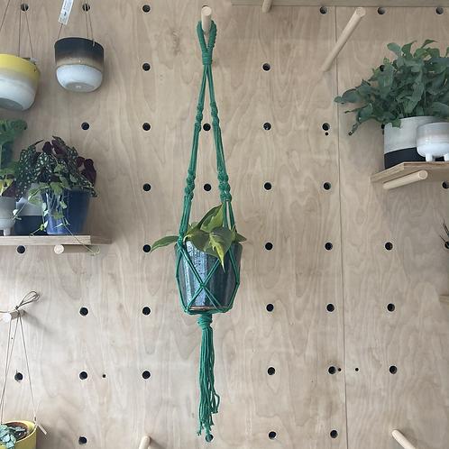 Hanging Macrame Plant Holder Green