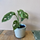 Thumbnail: Alicante cream plant pot 9x8cm