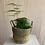 Thumbnail: Seagrass Basket Plant Pot 17x13cm (various colours)
