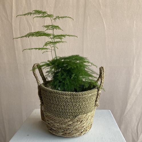 Seagrass Basket Plant Pot 17x13cm (various colours)