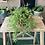 Thumbnail: Senecio Twinkle Star plant