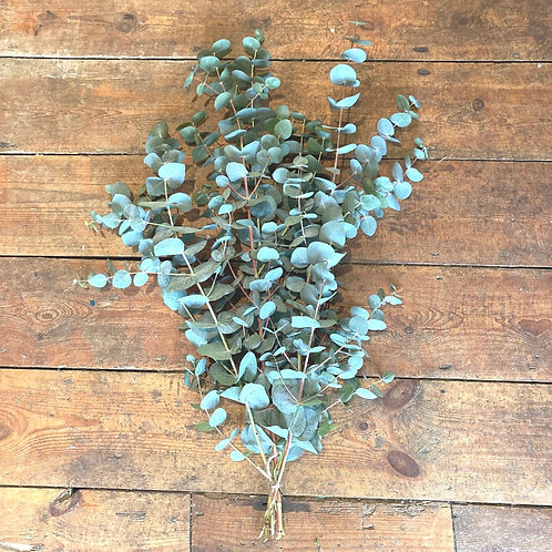 Fresh bunch of Eucalyptus