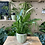 Thumbnail: Fernside Leaf Plant Pot 10.5x10.5x10