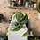 Thumbnail: Scindapsus Pictus (Satin Pothos) trailing plant