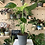 Thumbnail: Monstera Plant - 14cm dia