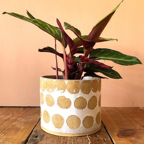Shopaseed Large Plant Pot