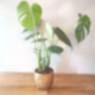 Potted House Plant - Delivered in Cambridge